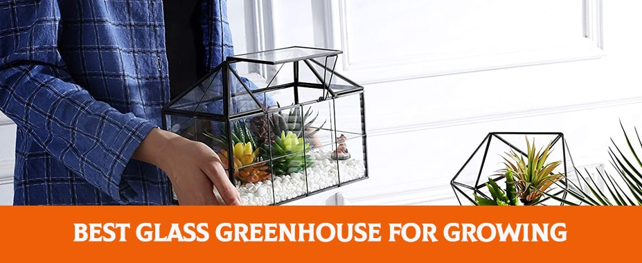 The Best Glass Greenhouse For Growing Your Own Crops
