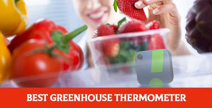 Best Greenhouse Thermometer and Hygrometer In 2021