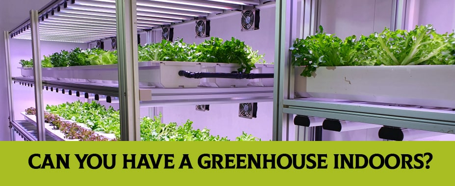 Can You Have A Greenhouse Indoors